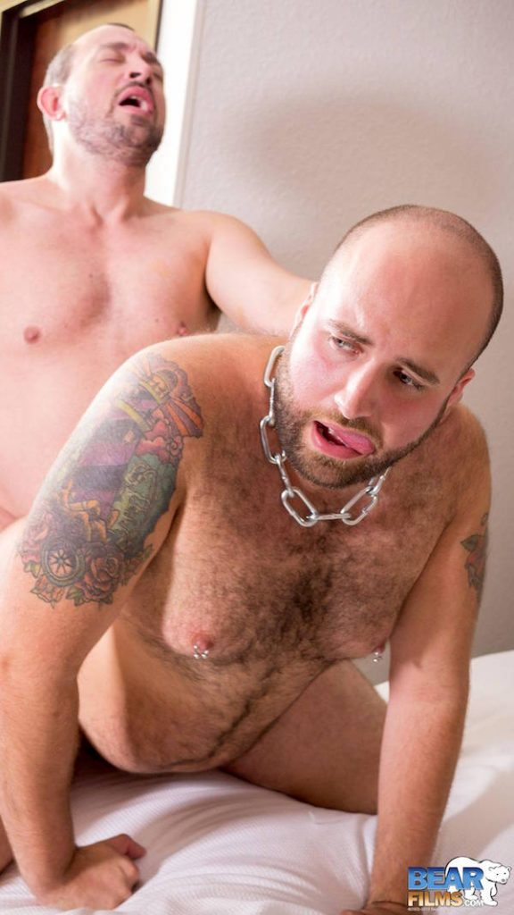 bear tatoué et poilu sodomisé
