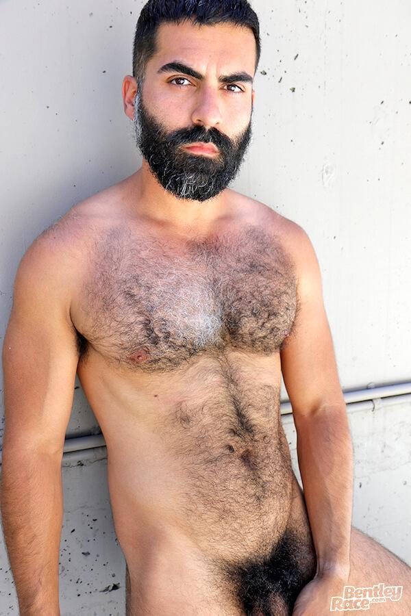 bear torse poilu